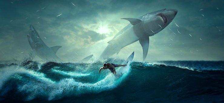 Hai, Surfer, Wave, Fantasy, Sea, Fish, Ocean, Nature