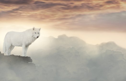 Wolf, Clouds, Fantasy, White, Mystical, Mysterious