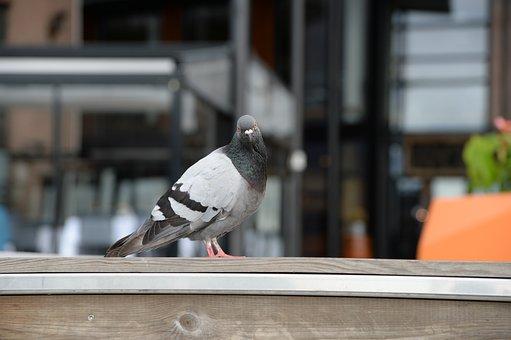 Dove, Bird, Animals, Nature, Spring, Animal Life, Fly