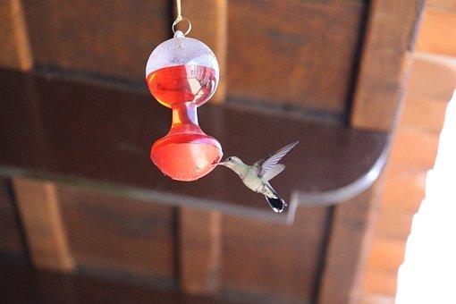 Awesome, Hummingbird, Nature, Chuparosas, Spring