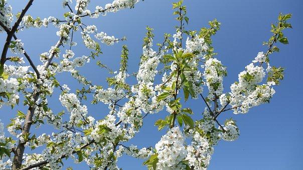 Spring, Flowers, Sky, Nature, Garden, Vernal, Beauty