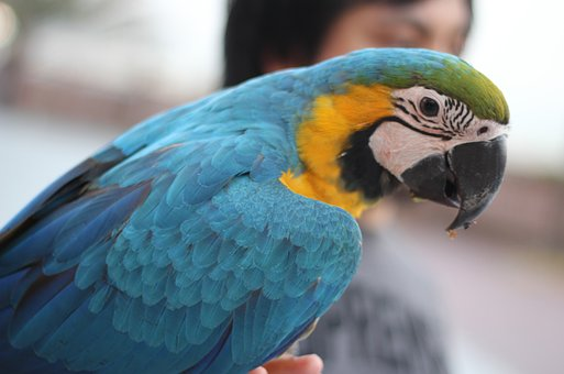 Bird, Parrot, Colorful, Nature, Color, Feather, Macaw