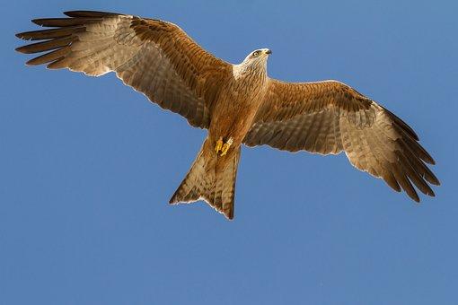 Spain, Huelva, El Rocio, Birding, Milano Real