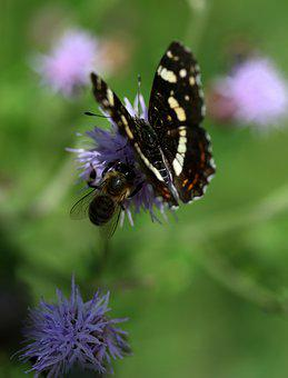 Butterfly, Black, Flower, Wings, Nice, Nature, Insecta