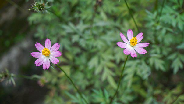 Flower, Pink, Cute, Blur, Nature, Garden