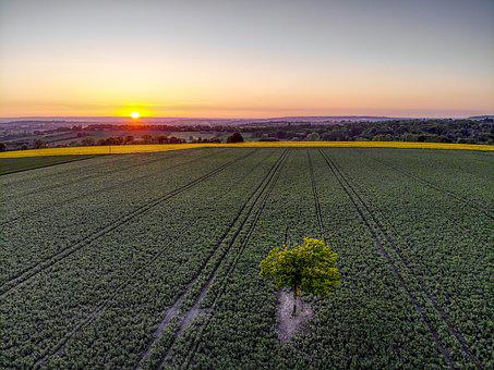 Sunset, England, Britain, Uk, Tree, Crop