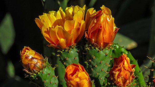 Flower, Cactus, Thorny, Plant, Green, Cacti
