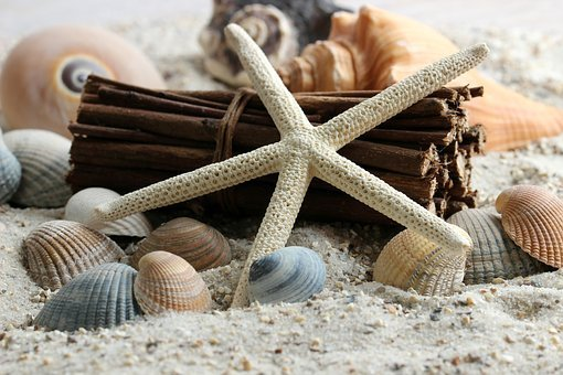 Sand, Water, Form Detail, Still Life, Close, Shell