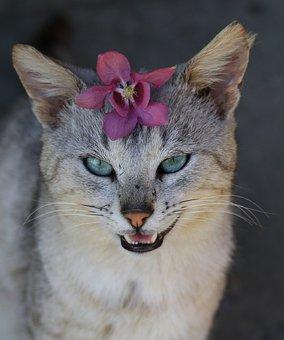 Cat, Flower, Wreath, Cute, Gray