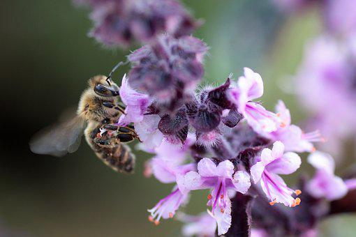 Wild Bee, Nature, Bee, Insect, Close, Macro, Flower