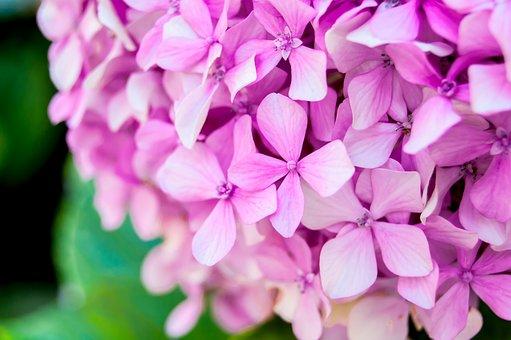 Flower, Flowers, Rosa, Nature, Garden, Flora, Spring