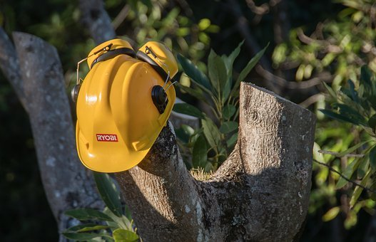 Tree, Sawn, Pruning, Hard Hat, Timber, Cut, Wood