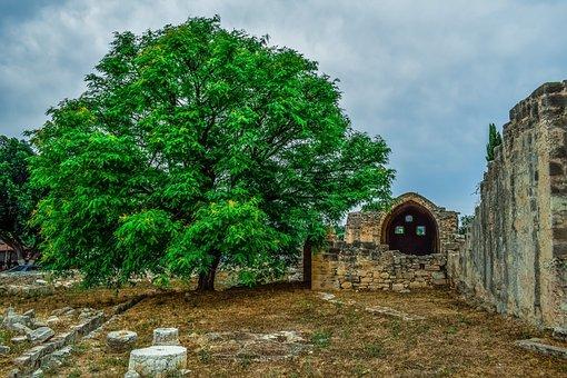 Tree, Wall, Ruins, Remains, Scenery, Kolossi, Cyprus