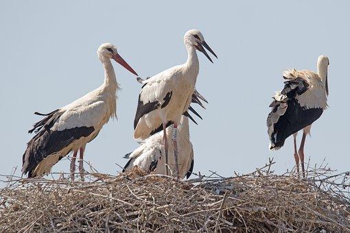 La Familia, Spain, Huelva, White Stork, Birding, Stork