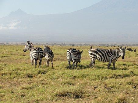 Zebras, Africa, National Park, Wildlife