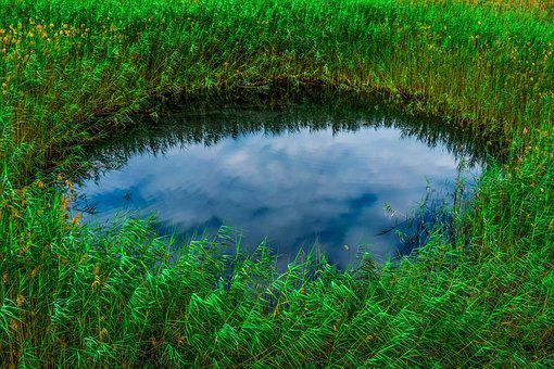 Swamp, Pond, Reeds, Nature, Sky, Clouds, Reflections