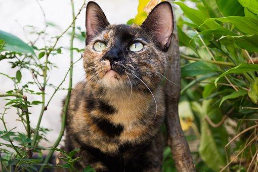 Cat, Garden, Animal, Pet, Nature, Cute, Kitten, Pets