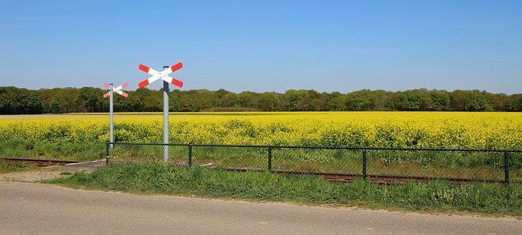 Rapeseed Field, Railway Crossing, Rapeseed, Railway