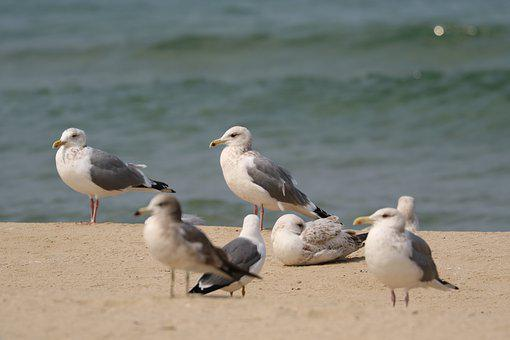 Seagull, Sand To The Beach