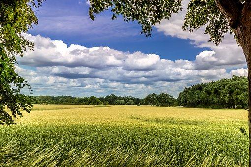Summer Walk, Summer, Sun, Sky, Landscape, Nature
