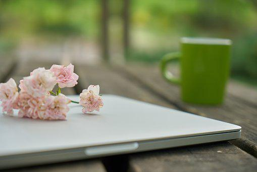 Technology, Computer, Keyboard, Flower, Nature, Work