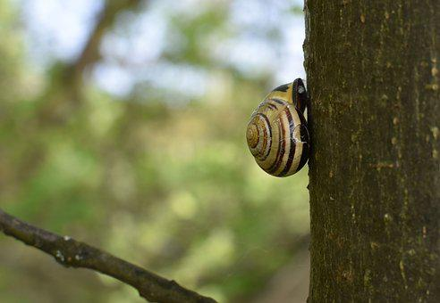Snail, Shell, Garden Bänderschnecke, Tree Bark