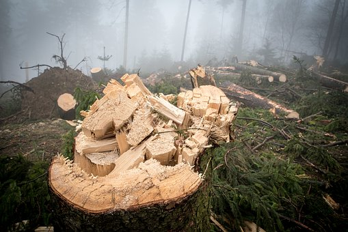 Log, Wood, Forest, Nature, Tree Trunks, Forestry, Trees