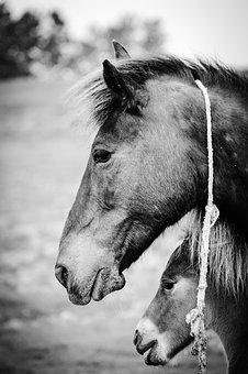 Mother, Horses, Animal, Young, Summer, Cute, Domestic