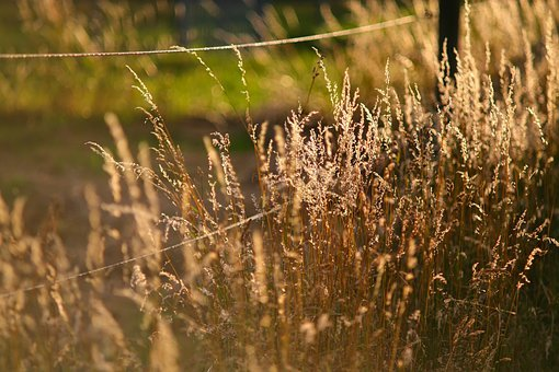 Nature, Landscape, Grass, Back Light, Mood, Sunshine