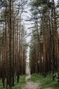 Forest, Journey, Nature, Background, Rain, Tree