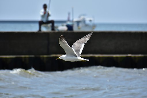 Animal, Sea, Beach, Ship, Fisherman, Bird, Wild Birds