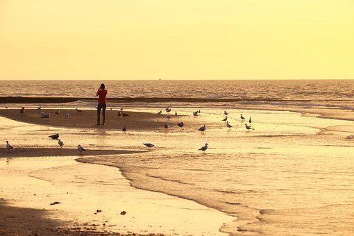Beach, Belgium, Abendstimmung, Sunset, Gulls, Sky