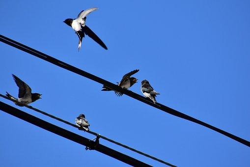 Animal, Sky, Electric Cable, Bird, Wild Birds, Yan