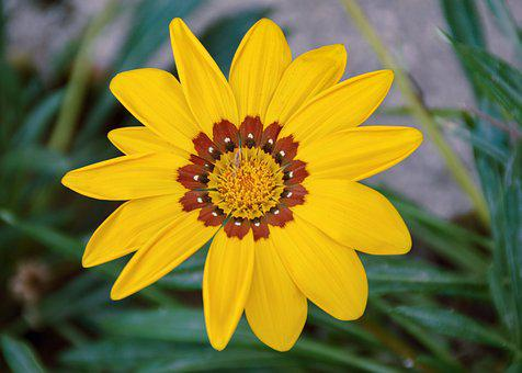 Beauty, Yellow, Bloom, Plant, Summer, Spring, Petals