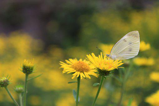 Flowers, Butterfly, Insects, Nature, Wing, Moth, Plants
