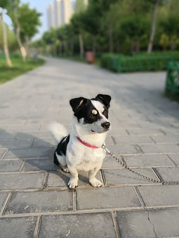 Dog, Collar, Bricks, Walkway, Pet, Chain