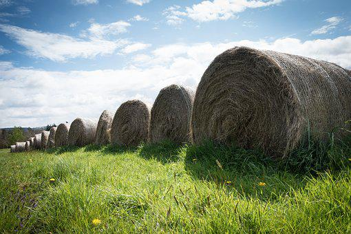 Hay, Spring, Farm, Nature, Agriculture, Straw, Harvest