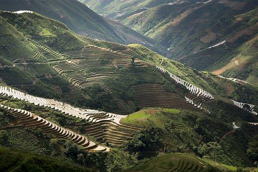 Minority, Scenery, Sơnla, Magical, Field, Vietnam, Step