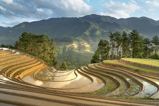 Season, Pour Water, Transplanted Rice, Minority, Field