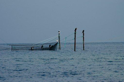Baltic Sea, Fishing, Networks, Network, Fish, Coast