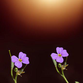 Flowers, Two, Purple, Purple Flowers, Flower Purple