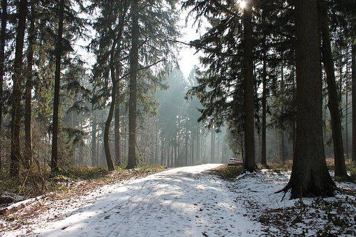 Forest, Winter, Snow, Nature, Trees, Landscape, Scenic