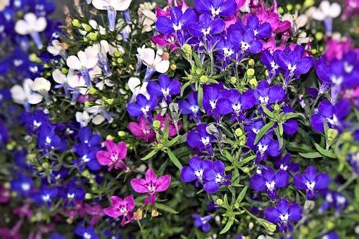 Flowers, Praise Lien, Although, Garden Flowers