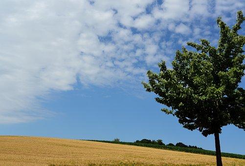 Summer, Sky, Landscape, Nature, Agriculture, Clouds