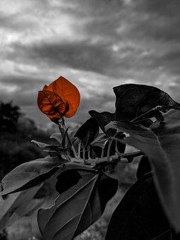 Leaf, Nature, Autumn, Variants, Flower, Tree