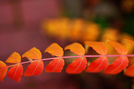 Leaves, Autumn, Bokeh, Colorful, Mood, Nature