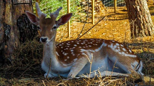 Deer, Nature, Animals, Wild, Mammal, Cute, Bambi