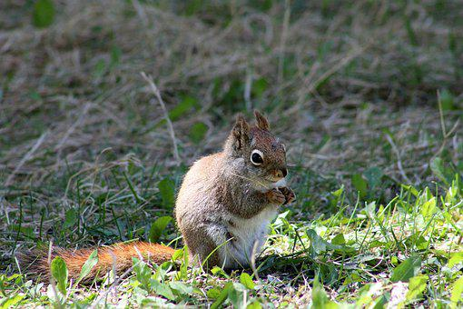 Squirrel, Eating, Sitting, Nature, Eat, Animal, Cute