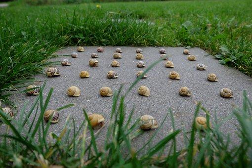 Snails, Nature, Pattern, Housing, Close, Animal World
