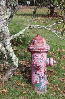 Old Tree, Fire Hydrant, Outdoor, Rusty, Nature, Old
